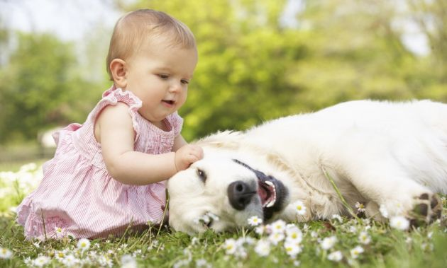 niña jalando oreja a perro