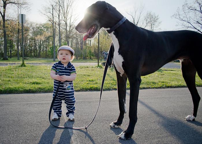 niño dando un paseo al perrito