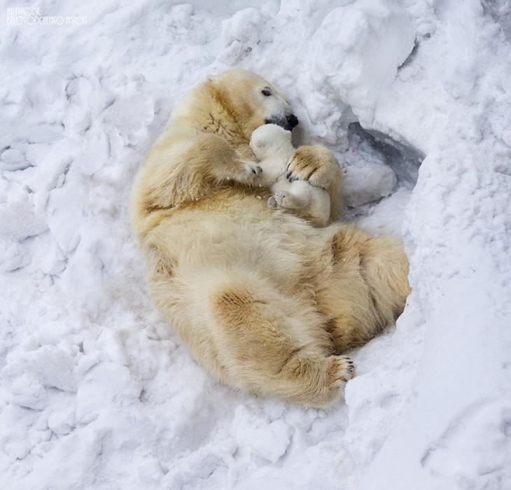 madre osa polar con su bebé