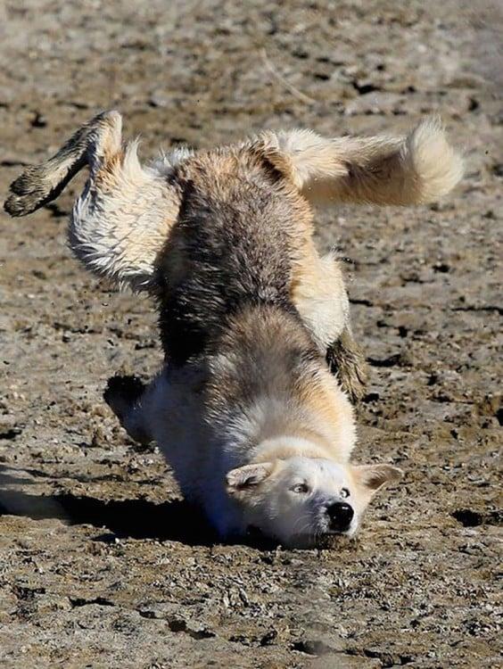 perro que se cae
