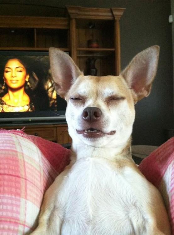 perro imitando la tv
