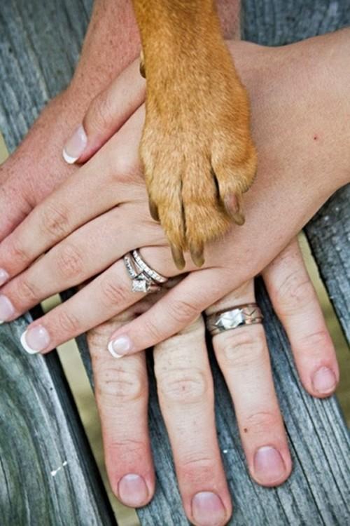 las manos de los novios y la pata de su perro