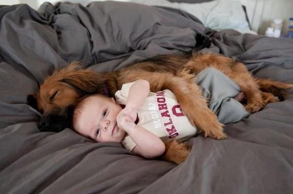 perro abrazando a bebe
