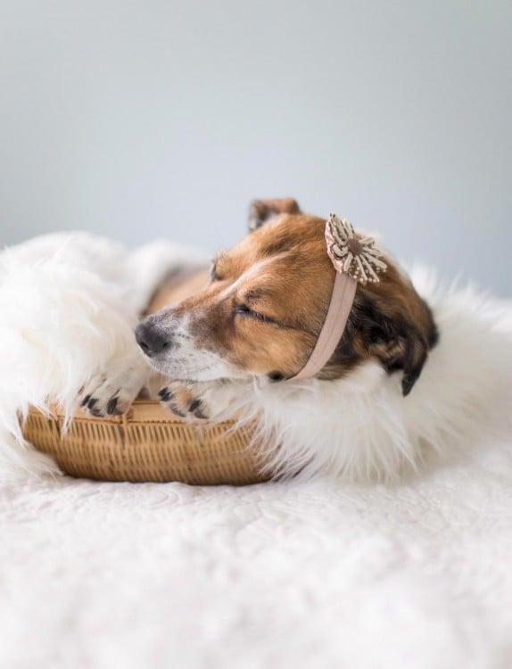perro vestido como bebé durmiendo