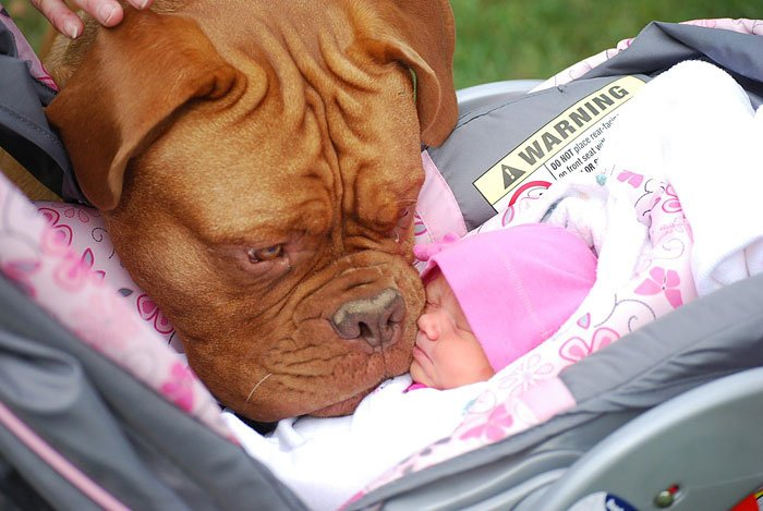 perro besando bb