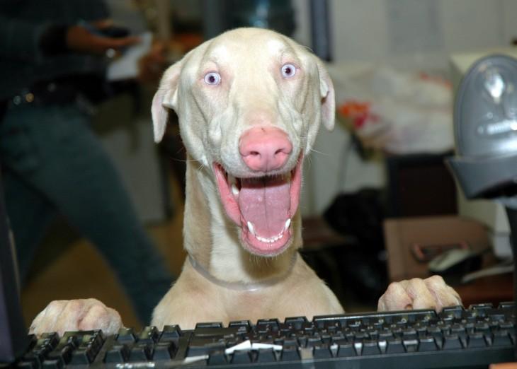 perro con teclado