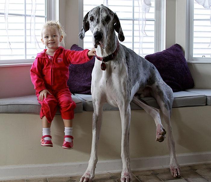 perro gran danes con niña