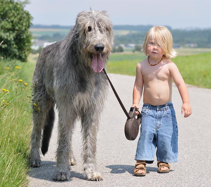 perro niño