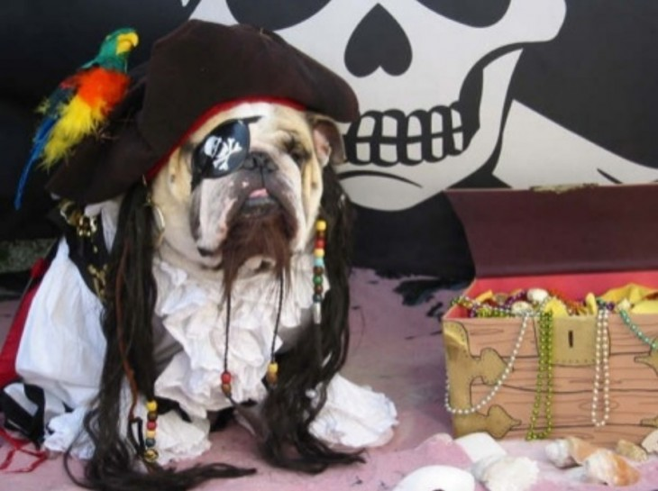 Pirate Halloween Costume