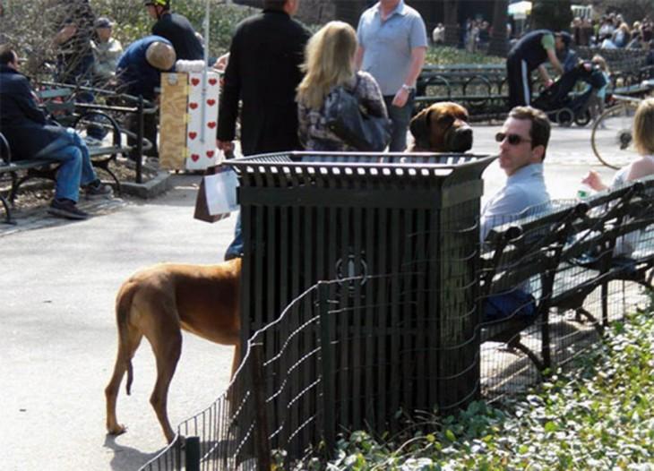 perro con cuello largo