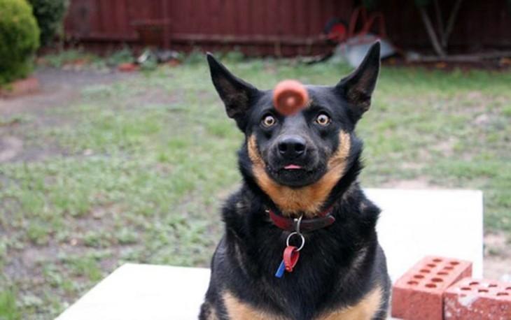 perro atajando comida
