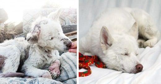 animales antes y despues de ser rescatados