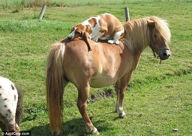 perro encima de caballo