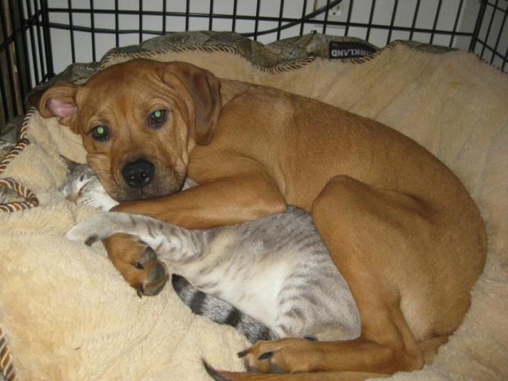 perro abrazando gato