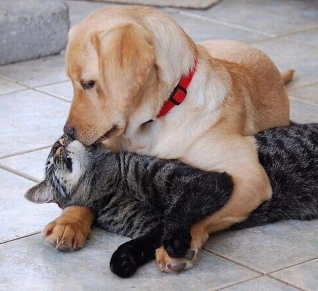 perro besando gato