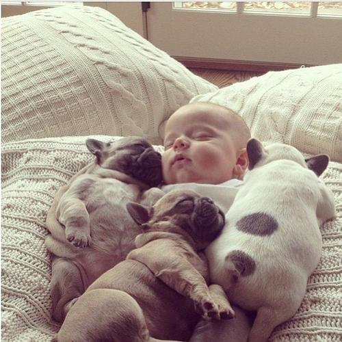 bebe y cachorros