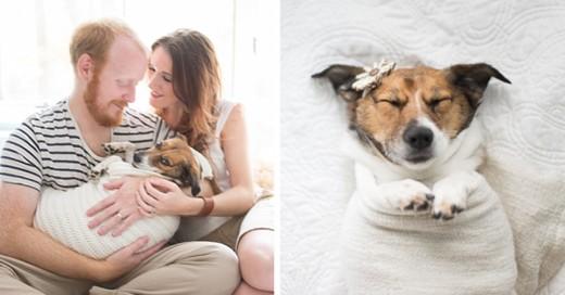 hicieron una sesion de fotos con su perro el resultado es muy bonito