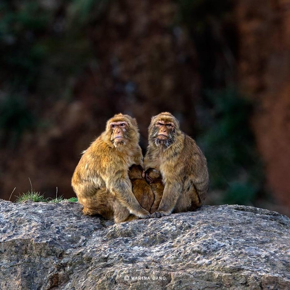 Hermosas imagenes de animales salvajes en su habitat narutal for Cosas insolitas e increibles