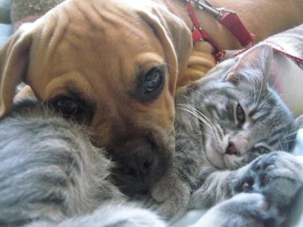 perro jugando con gato