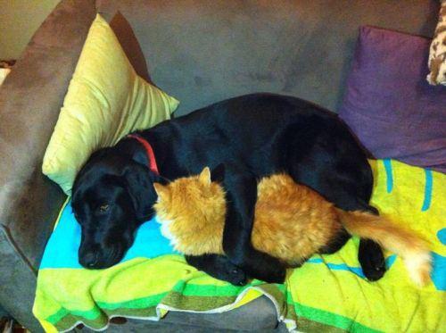 gato y perros dormidos