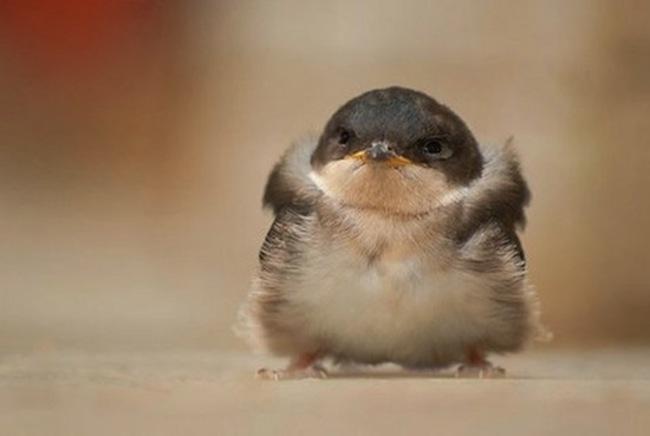 pájaro esponjado