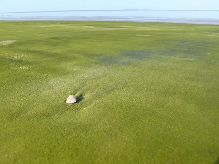 Playa verde en Guyana Francesa