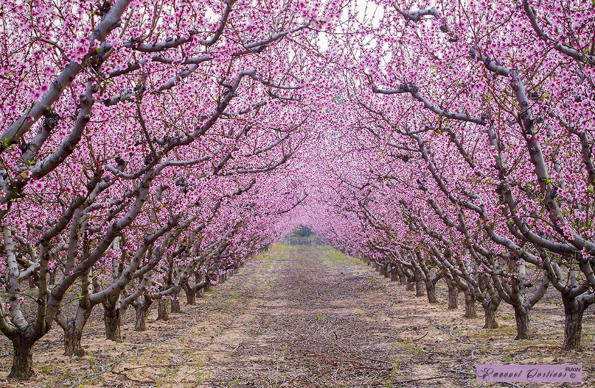 japanese garden cherry blossom paintings caminos m 225 gicos en el mundo que tienes que