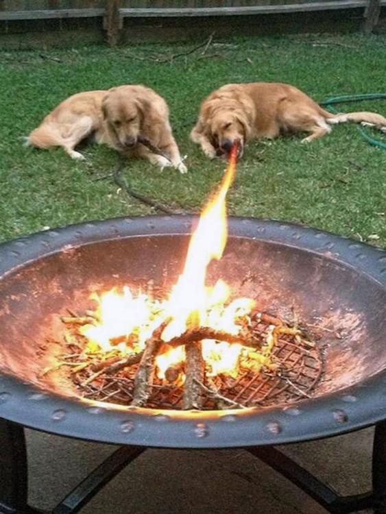Perros escupe fuegos