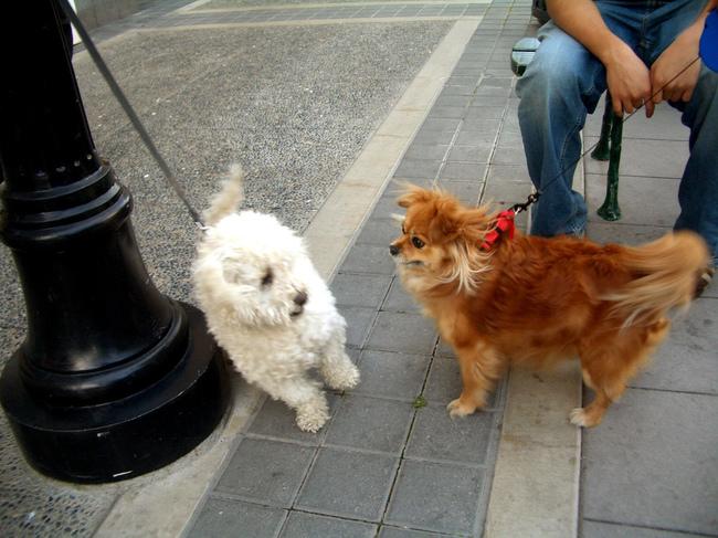 perro blanco y perro cafe