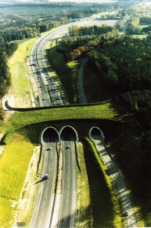 puente cruce de animales, Holanda