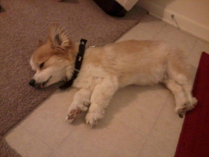 perrito dormido en la alfombra