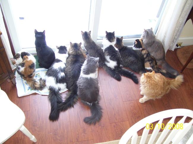 manada de gatos