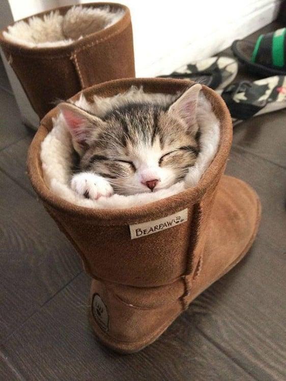 gatito dormido dentro de la bota