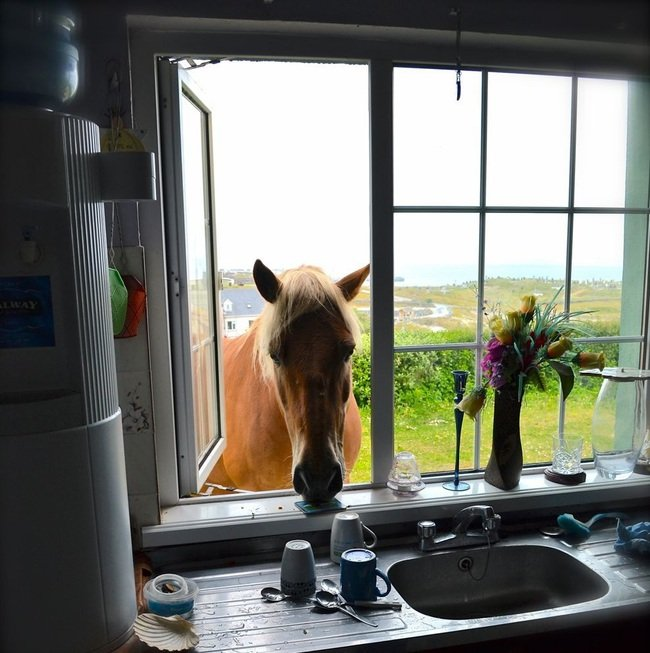 caballo metiendo la cabeza por la ventana