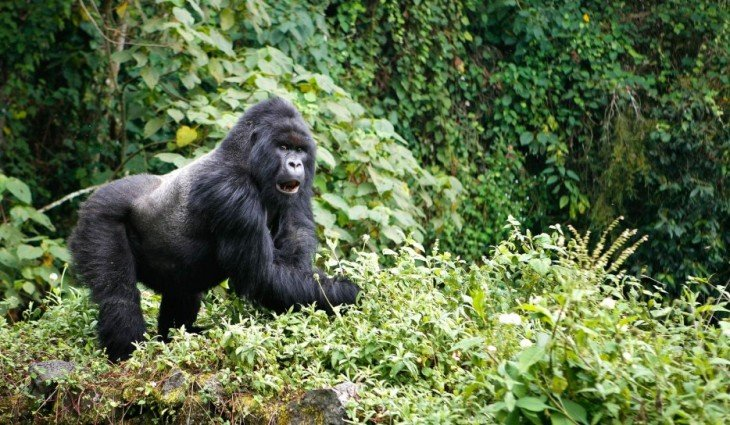 54RW06-IM1173-virunga-mountains-1475-934x