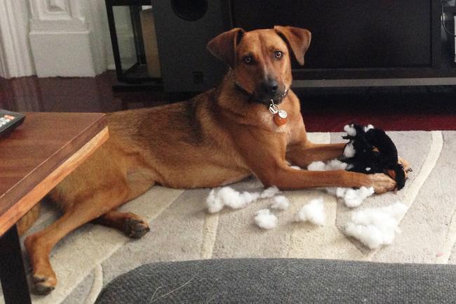 perrito jugando con muñeco
