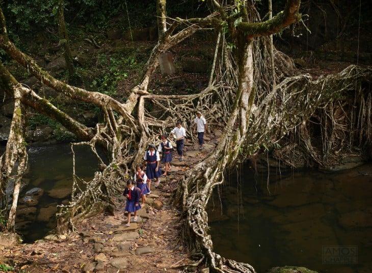 raíz de árbol, india