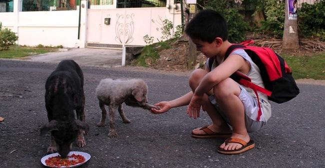 niño alimentando a perrito