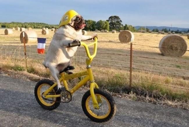 perrito en bicicleta