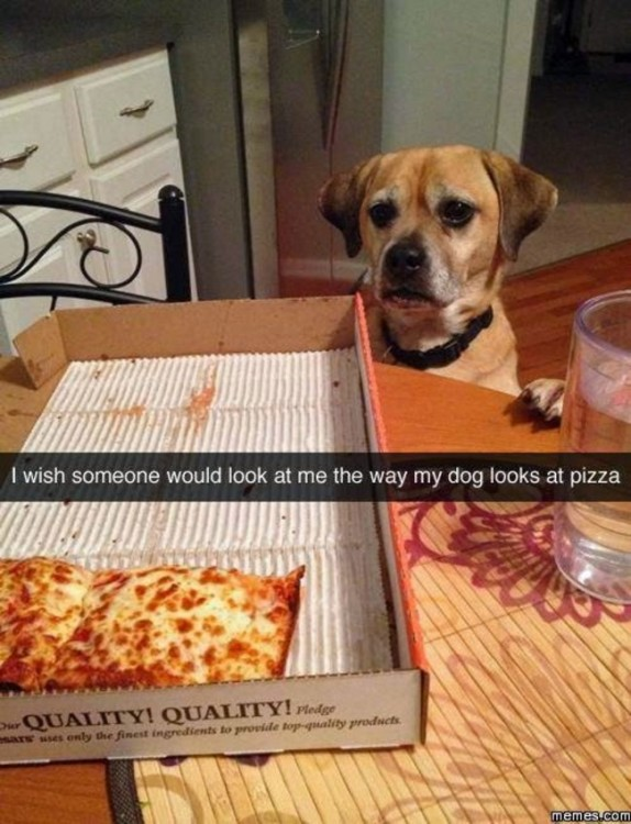 perro viendo una pizza