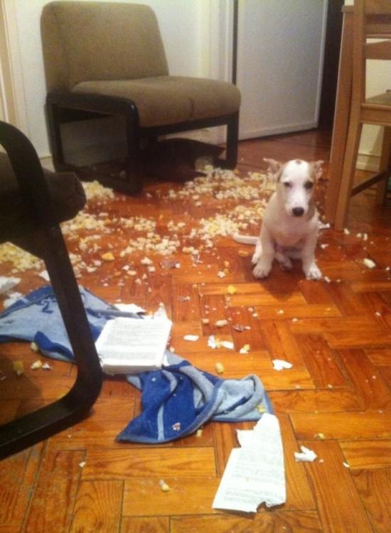 perro y toalla tirada