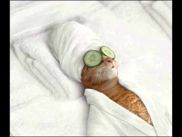 Gato acostado con una toalla en la cabeza y con dos pepinos en sus ojos