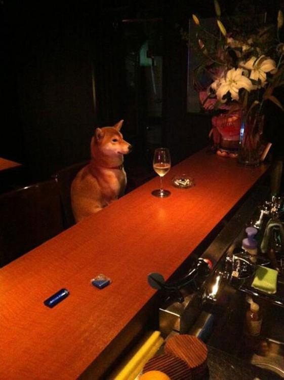 Perro sentado en la barra de un bar
