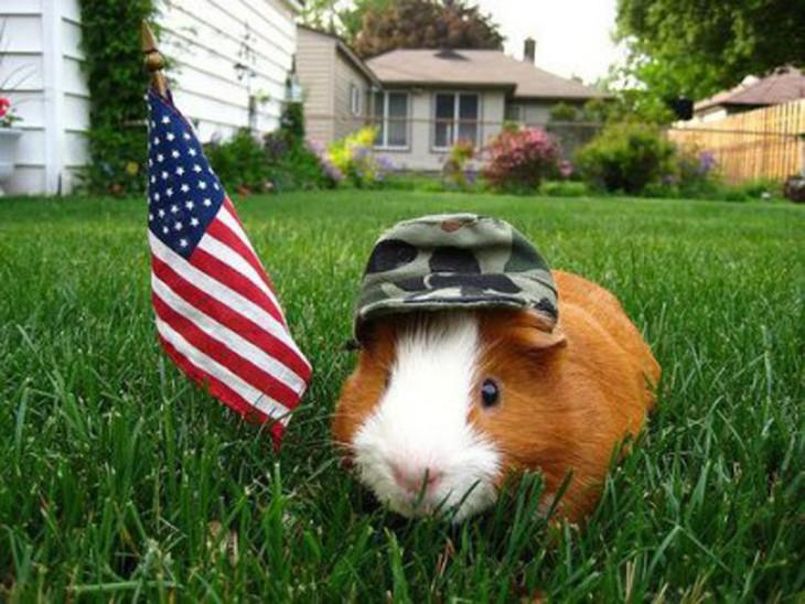 Hamster en el jardín de una casa con una bandera de EUA y una gorra de soldado