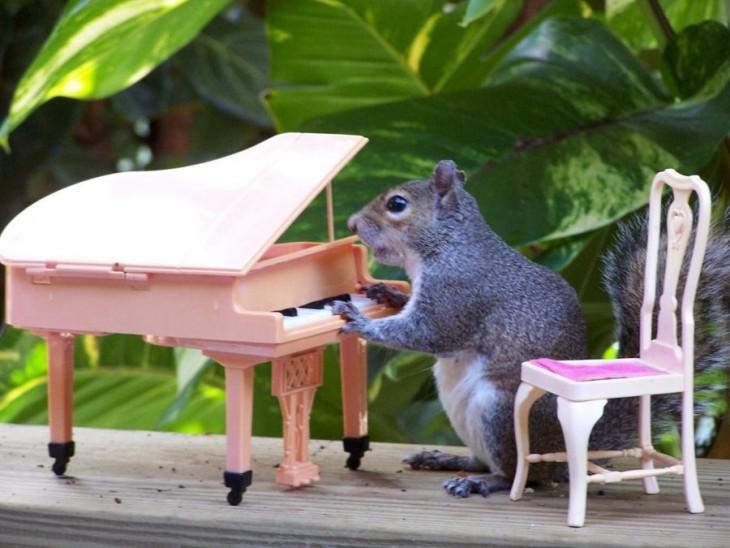 Ardilla tocando el piano