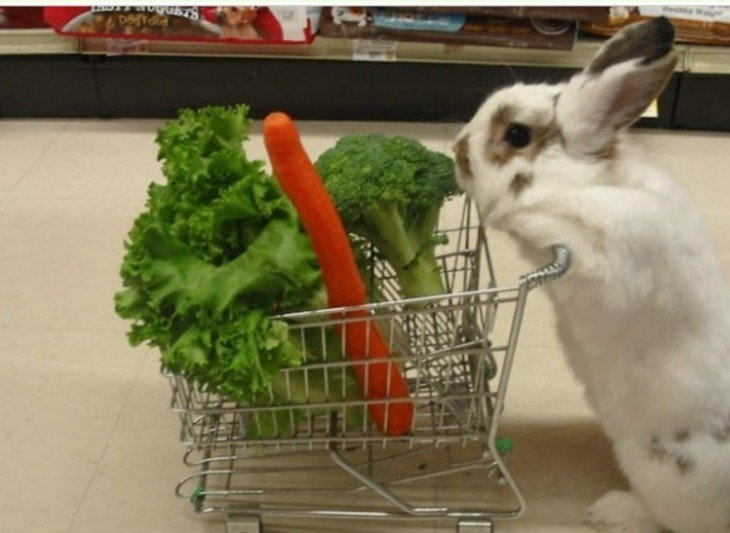conejo con un carito de compras lleno de zanahorias y brocoli