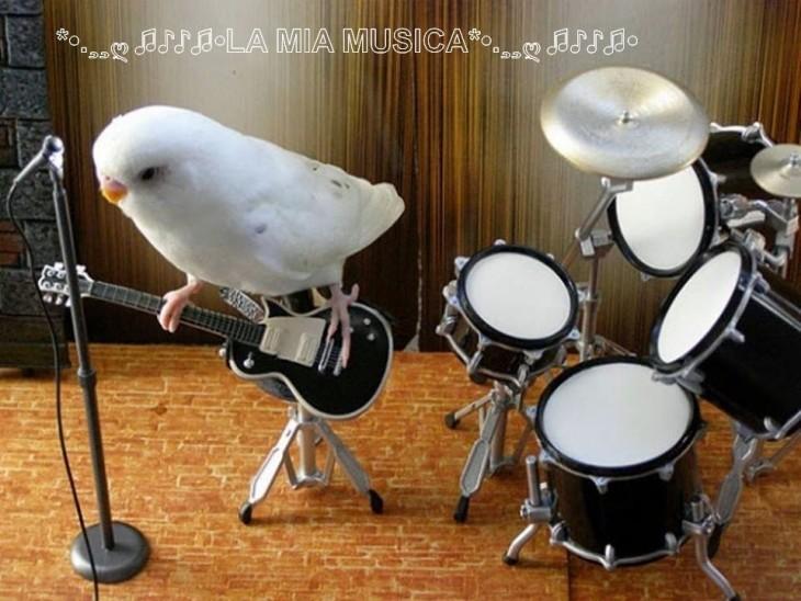 Pájaro tocando la guitarra junto a una bateria y frente a un micrófono