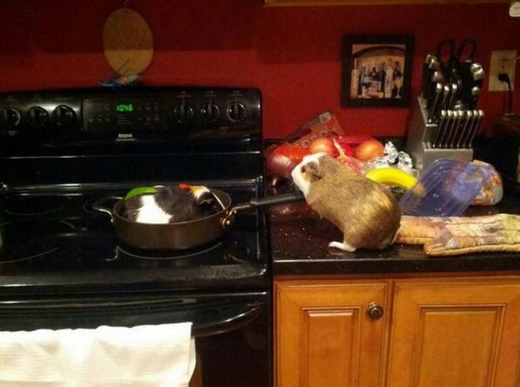 Hamster en una cocina cocinando a otro hamster