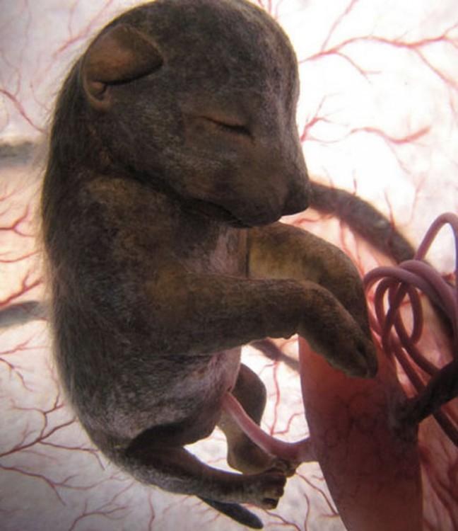12 Hermosos Animales En El Vientre, Antes De Nacer