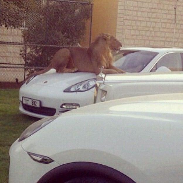Lujos de Millonarios en Dubai